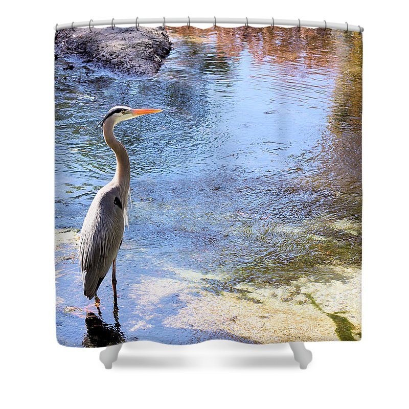 Great Blue Heron Shower Curtain featuring the photograph Blue Heron With Shadow by Kristin Elmquist