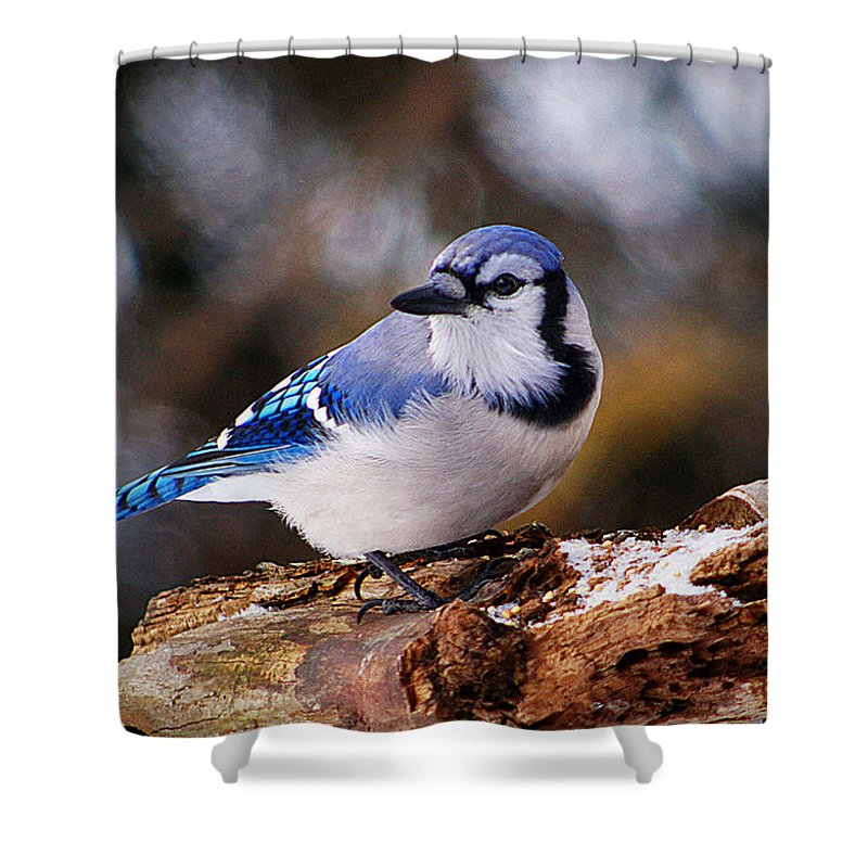 Birds Shower Curtain featuring the photograph Blue Jay Day by Arthur Miller