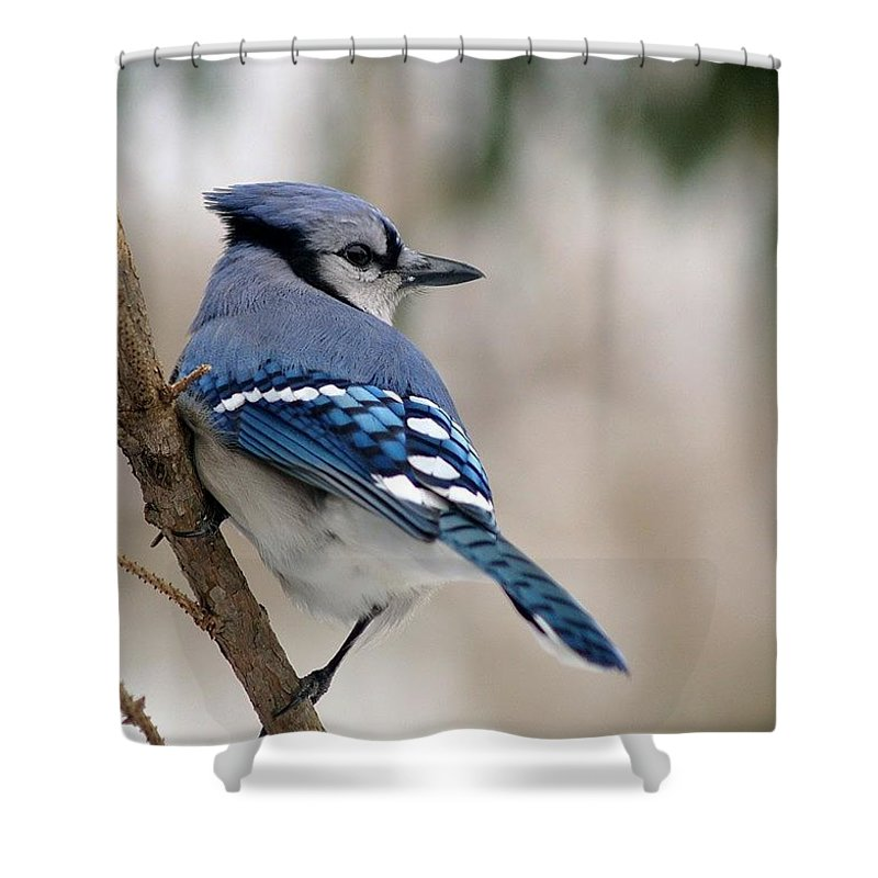 Blue Jay Shower Curtain featuring the photograph Blue Jay by Gaby Swanson