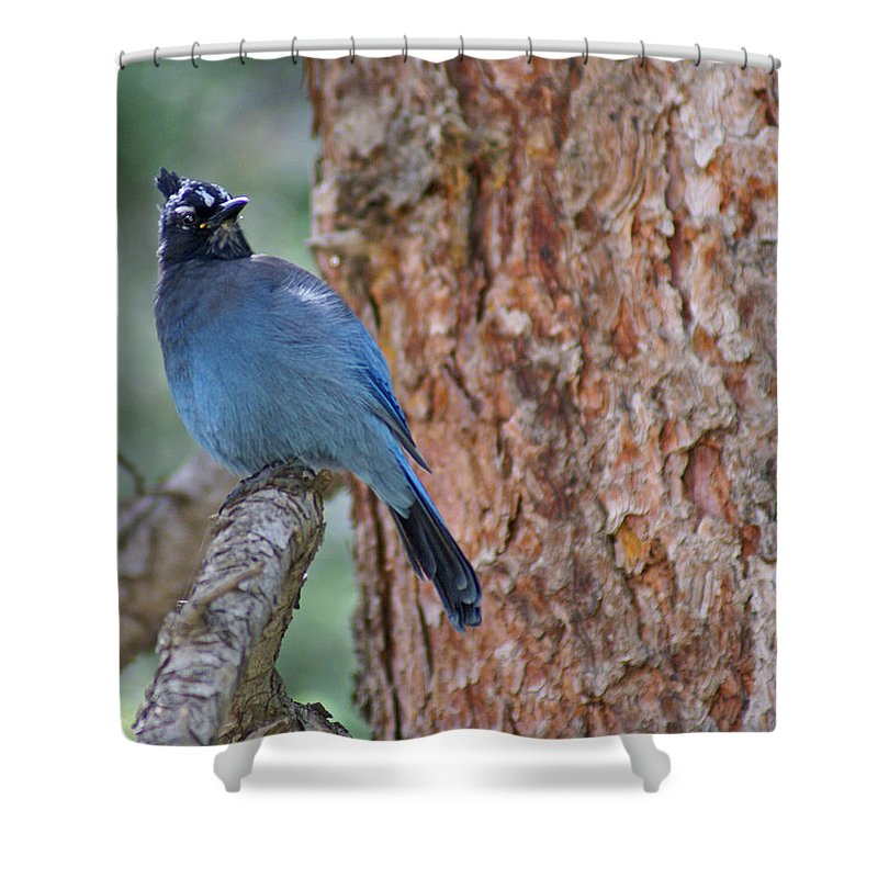 Blue Jay Shower Curtain featuring the photograph Blue Jay by Heather Coen