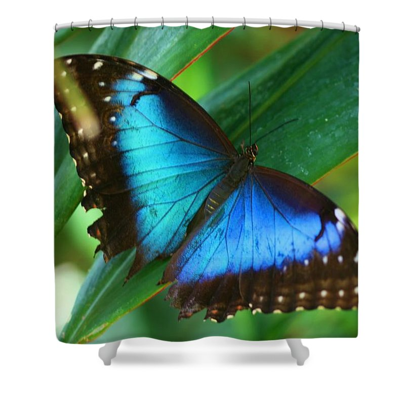 Butterfly Shower Curtain featuring the photograph Blue Morpho Butterfly by Kristina Jones