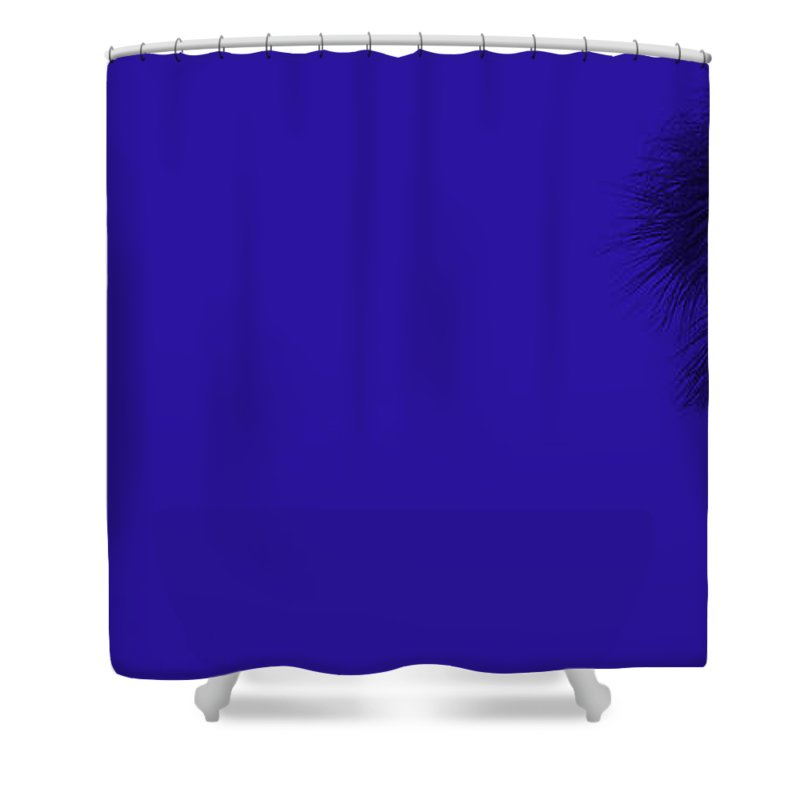 Landscape Shower Curtain featuring the photograph Blue Palm by Ed Smith