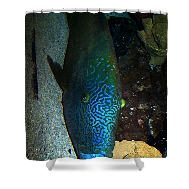 Fish Shower Curtain featuring the photograph Blue Parrot Fish by Anthony Jones