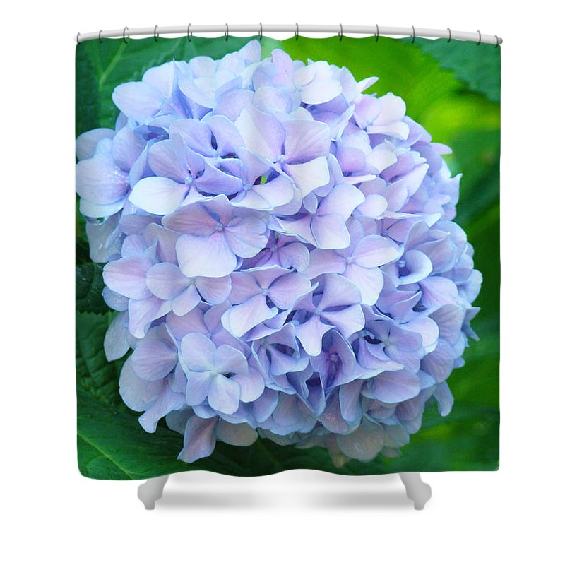 Green Shower Curtain featuring the photograph Blue Purple Hydrandea Floral Art Botanical Prints Canvas by Baslee Troutman