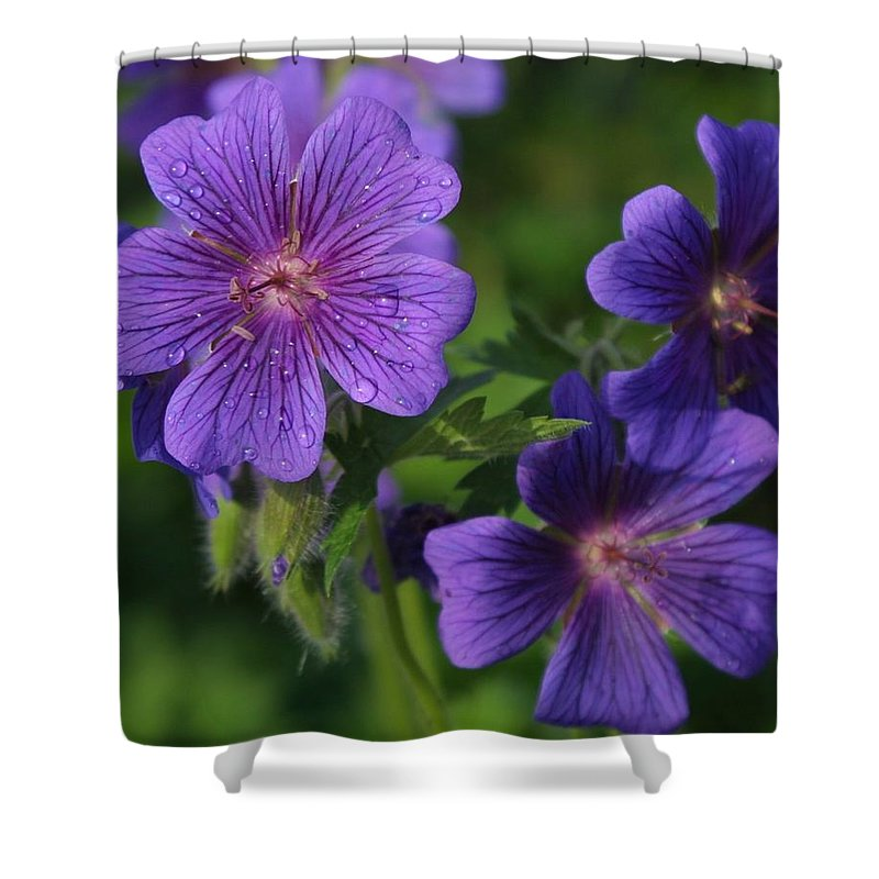 Blue Shower Curtain featuring the photograph Blue Raindrops by Ian MacDonald