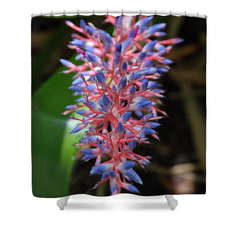 Red Shower Curtain featuring the photograph Blue Red Plant by Rob Hans