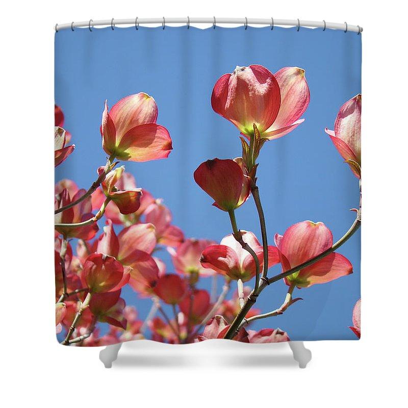 Dogwood Shower Curtain featuring the photograph Blue Sky Art Prints Pink Dogwood Flowers 16 Dogwood Tree Art Prints Baslee Troutman by Baslee Troutman