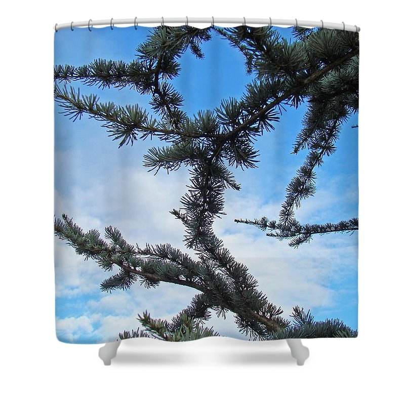 Pine Shower Curtain featuring the photograph Blue Sky Art Prints White Clouds Conifer Pine Branches Baslee Troutman by Baslee Troutman