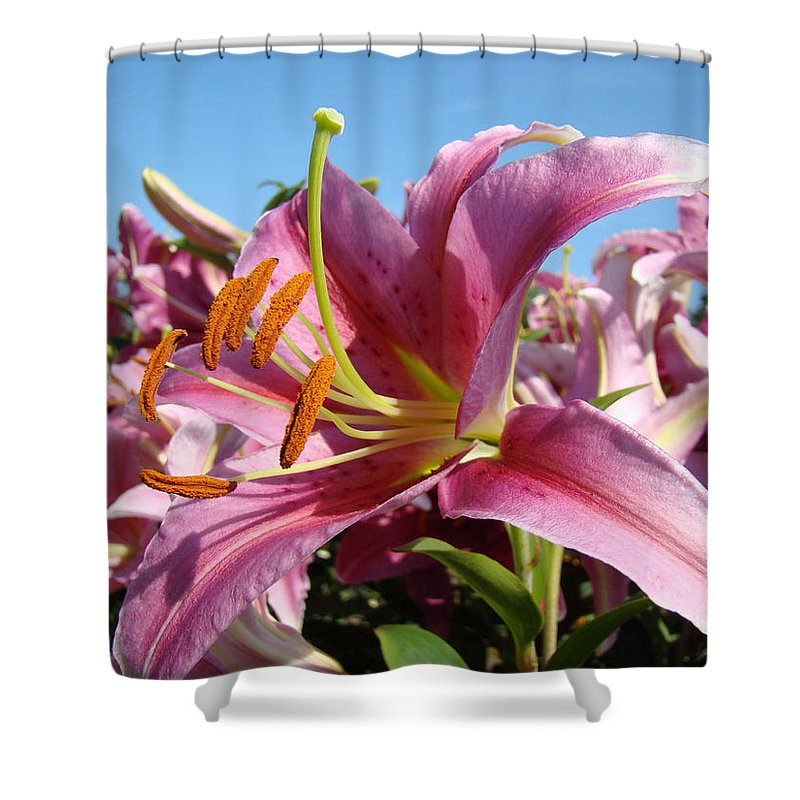 Lilies Shower Curtain featuring the photograph Blue Sky Floral Landscape Pink Lilies Art Prints Canvas Baslee Troutman by Baslee Troutman