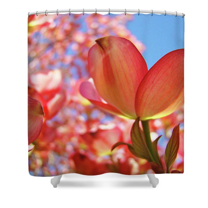 Dogwood Shower Curtain featuring the photograph Blue Sky Pink Azalea Dogwood Flowers 4 Landscape Nature Artwork by Baslee Troutman
