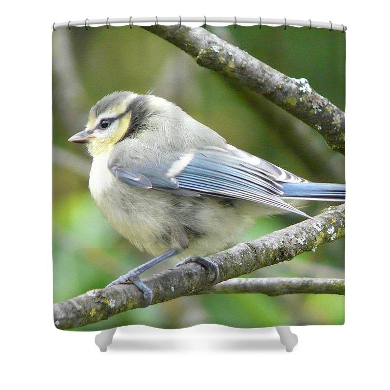 Bird Shower Curtain featuring the photograph Blue Tit by Valerie Ornstein