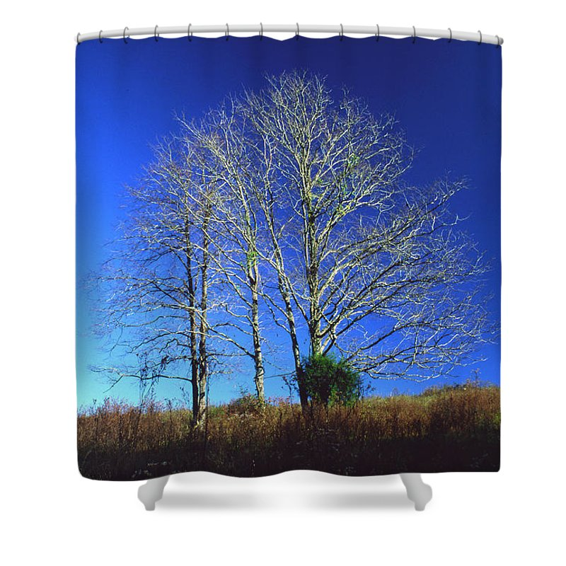 Landscape Shower Curtain featuring the photograph Blue Tree In Tennessee by Randy Oberg