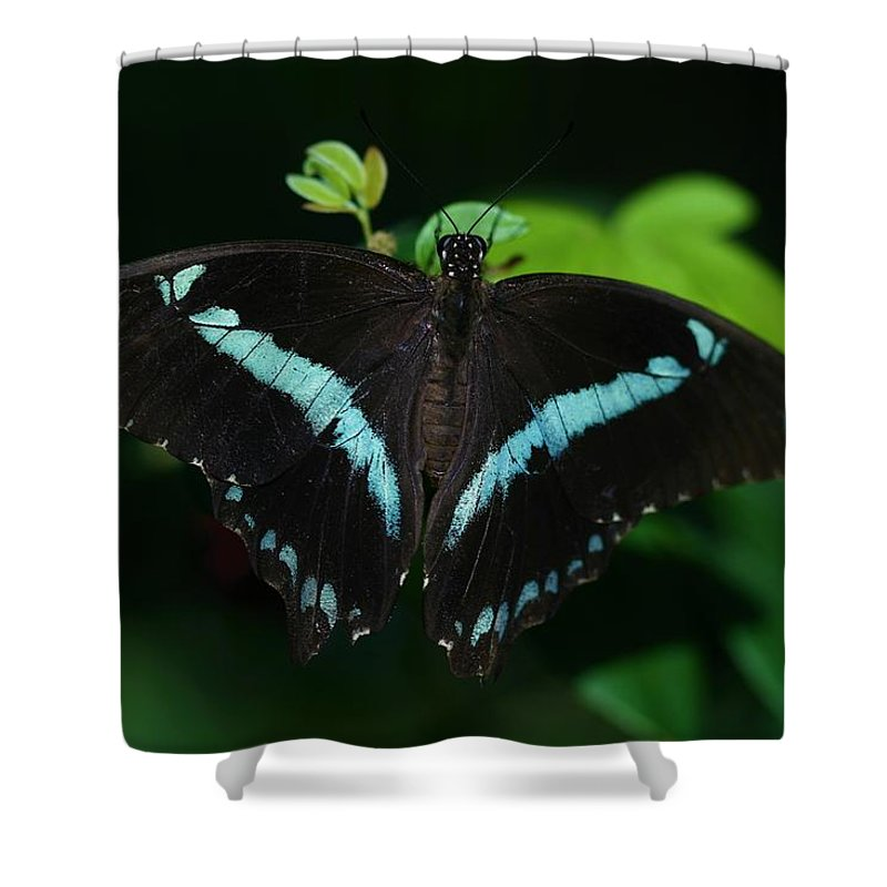 Butterfly Shower Curtain featuring the photograph Blue Triangle Butterfly by Kristina Jones