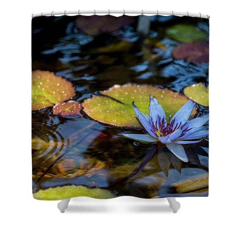 Nymphaeaceae Shower Curtains