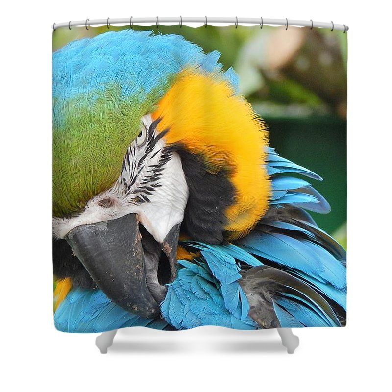 Parrot Shower Curtain featuring the photograph Blue/yellow Parrot by Alison Martin