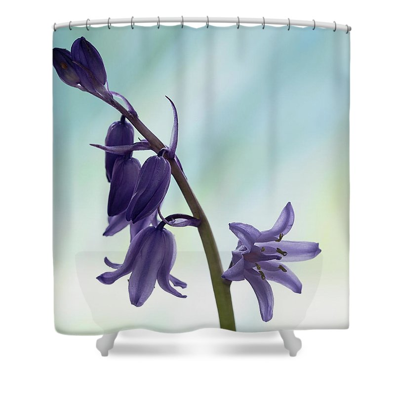 Floral Shower Curtain featuring the photograph Bluebells 2 by Shirley Mitchell