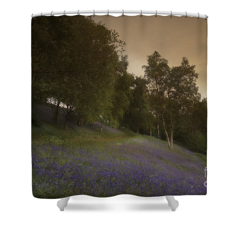 Bluebell Shower Curtain featuring the photograph Bluebells by Angel Ciesniarska