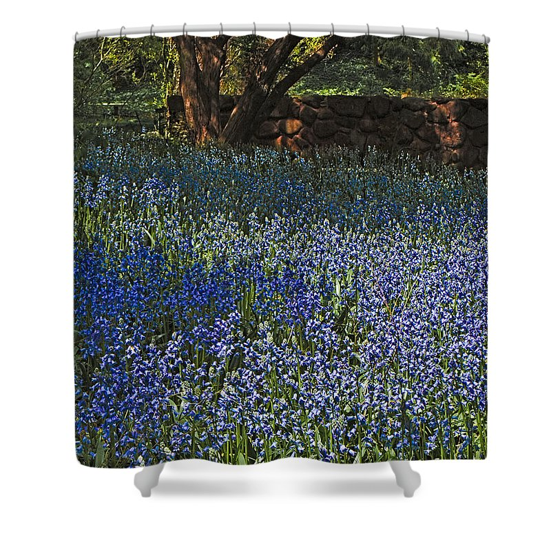 Bluebells Shower Curtain featuring the photograph Bluebells by Chris Lord