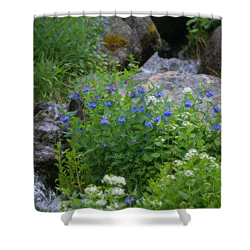 Wildflowers Shower Curtain featuring the photograph Bluebells by Heather Coen