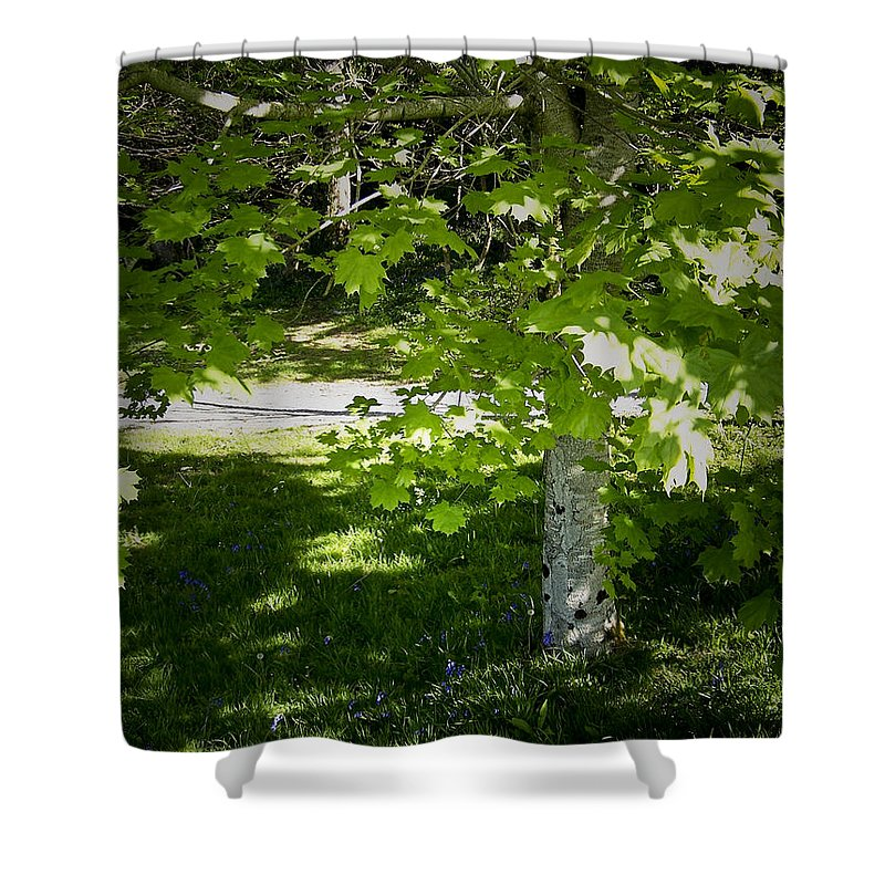 Irish Shower Curtain featuring the photograph Bluebells In Killarney National Park Ireland by Teresa Mucha