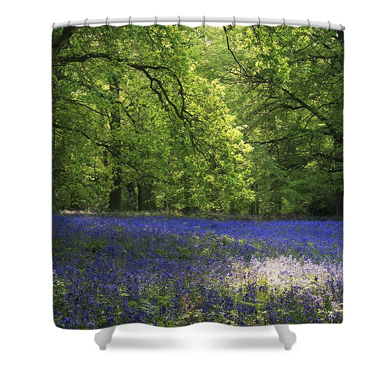 Bluebells Shower Curtain featuring the photograph Bluebells by Phil Crean