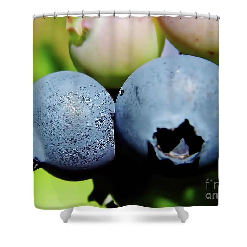 Blue Berries Shower Curtain featuring the photograph Blueberries by D Hackett