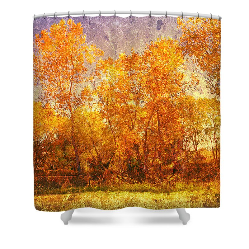 Trees Shower Curtain featuring the photograph Gold Trees by Toni Hopper
