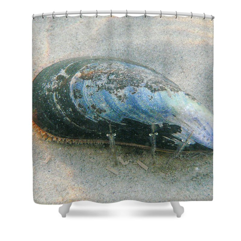 Shell Shower Curtain featuring the photograph Blues Brothers by Are Lund