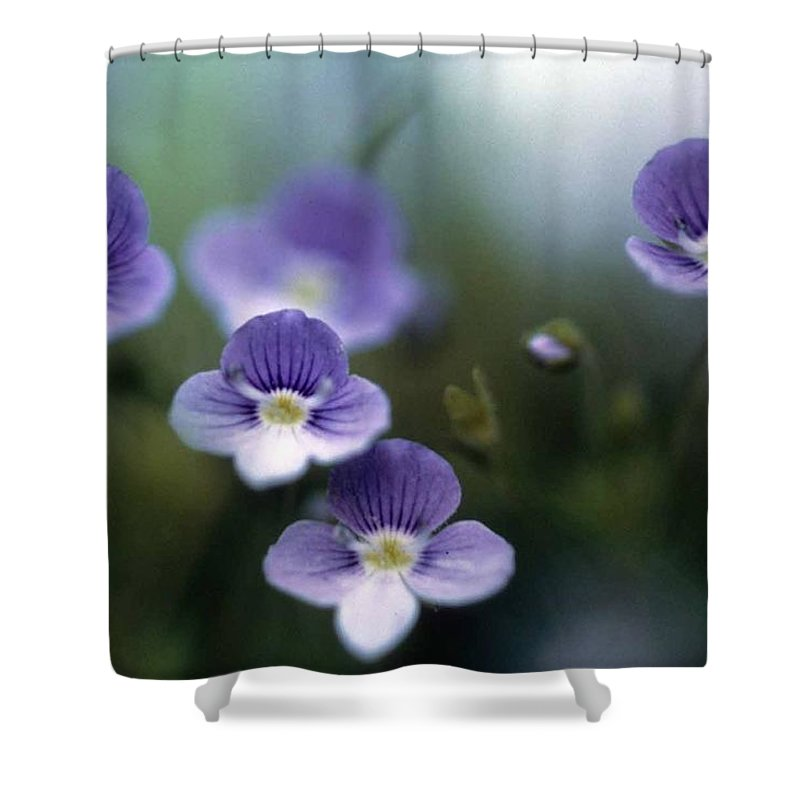 Bluettes Shower Curtain featuring the photograph Bluettes by Laurie Paci