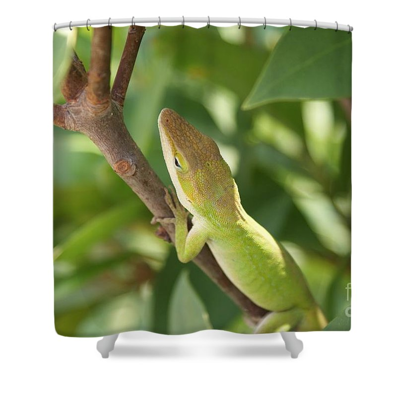 Lizard Shower Curtain featuring the photograph Blusing Lizard by Shelley Jones