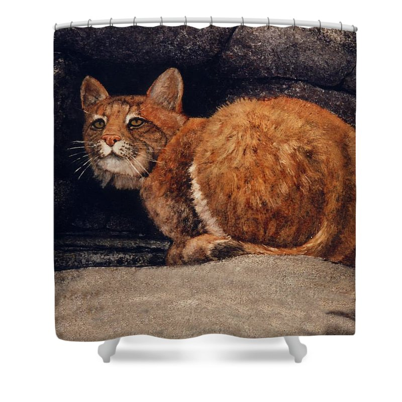 Wildlife Shower Curtain featuring the painting Bobcat On Ledge by Frank Wilson