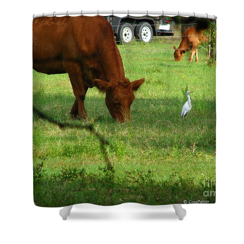 Cows Shower Curtain featuring the photograph Bodyguard by Greg Patzer