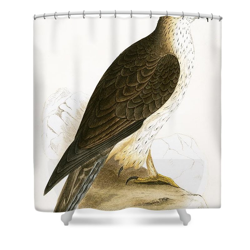 Ornithology Shower Curtain Featuring The Painting Bonellis Eagle By English School