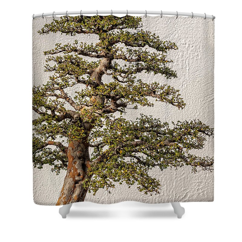 Tree Shower Curtain Featuring The Photograph Bonsai Tree By Gene Healy