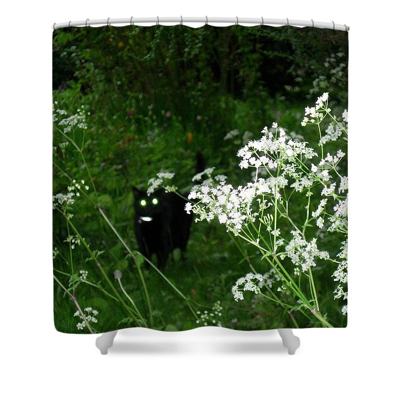 Black Cat Shower Curtain featuring the photograph Boo Boo by Maria Joy