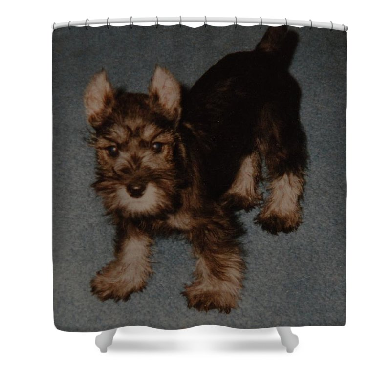 Dog Shower Curtain featuring the photograph Boo Boo by Rob Hans