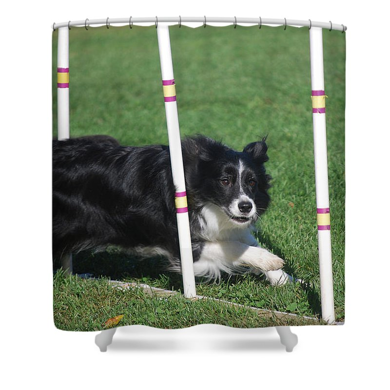 Animal Shower Curtain featuring the photograph Border Collie Weaving by Melinda Schneider