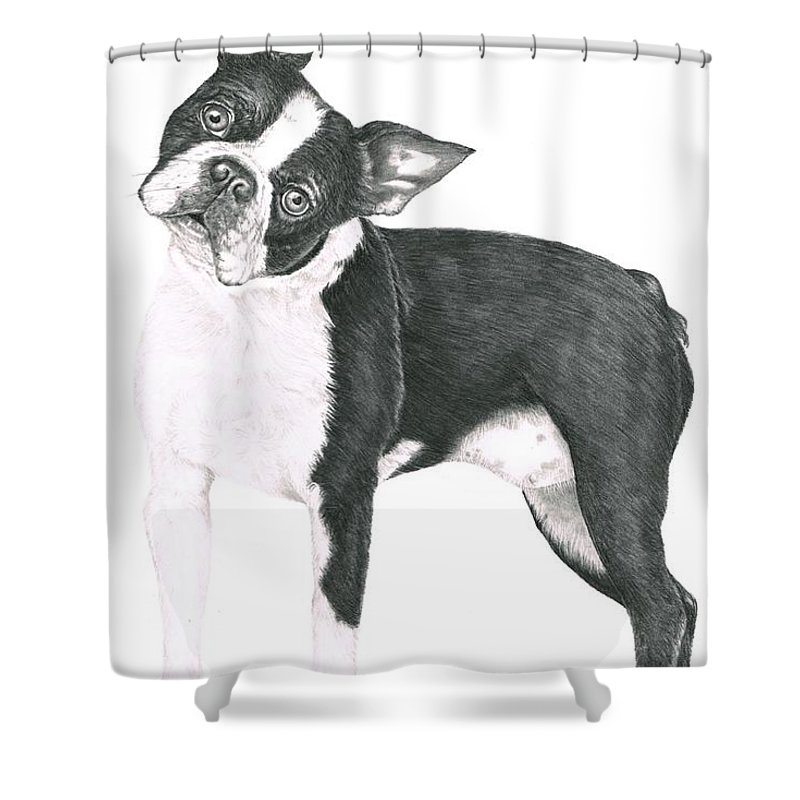 Dog Shower Curtain featuring the drawing Boston Terrier by Murphy Elliott