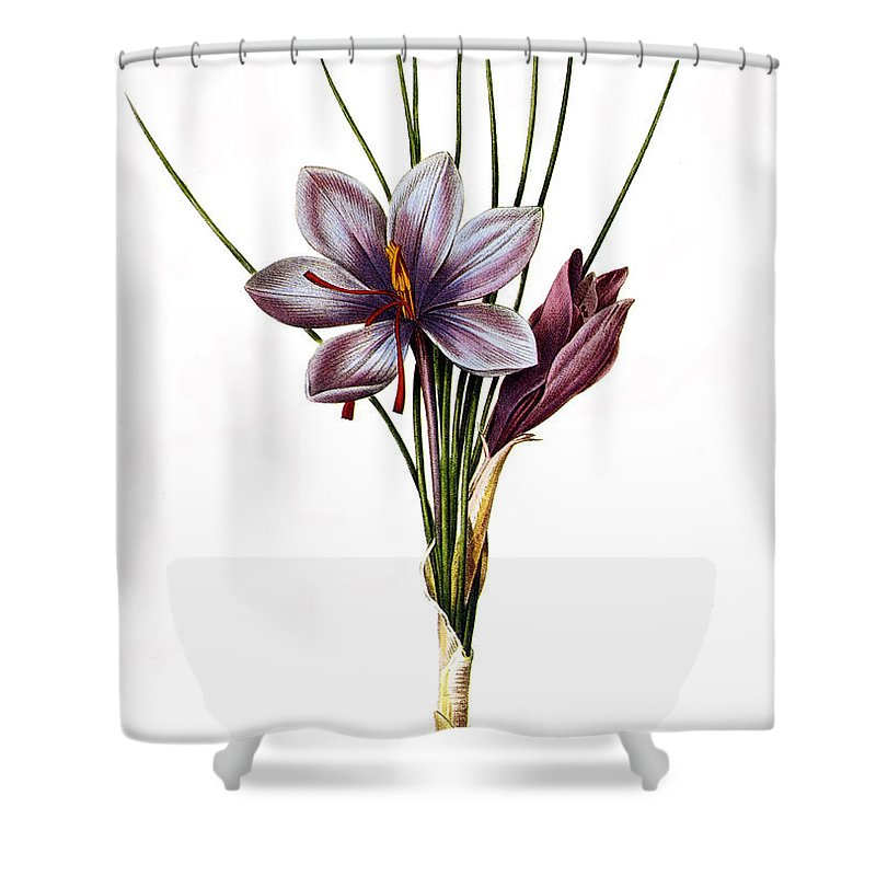 1833 Shower Curtain featuring the photograph Botany: Saffron by Granger