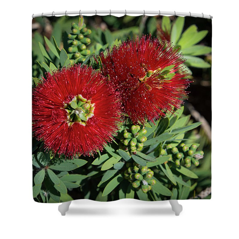 Plant Shower Curtain featuring the photograph Bottle Brush by Dennis Reagan
