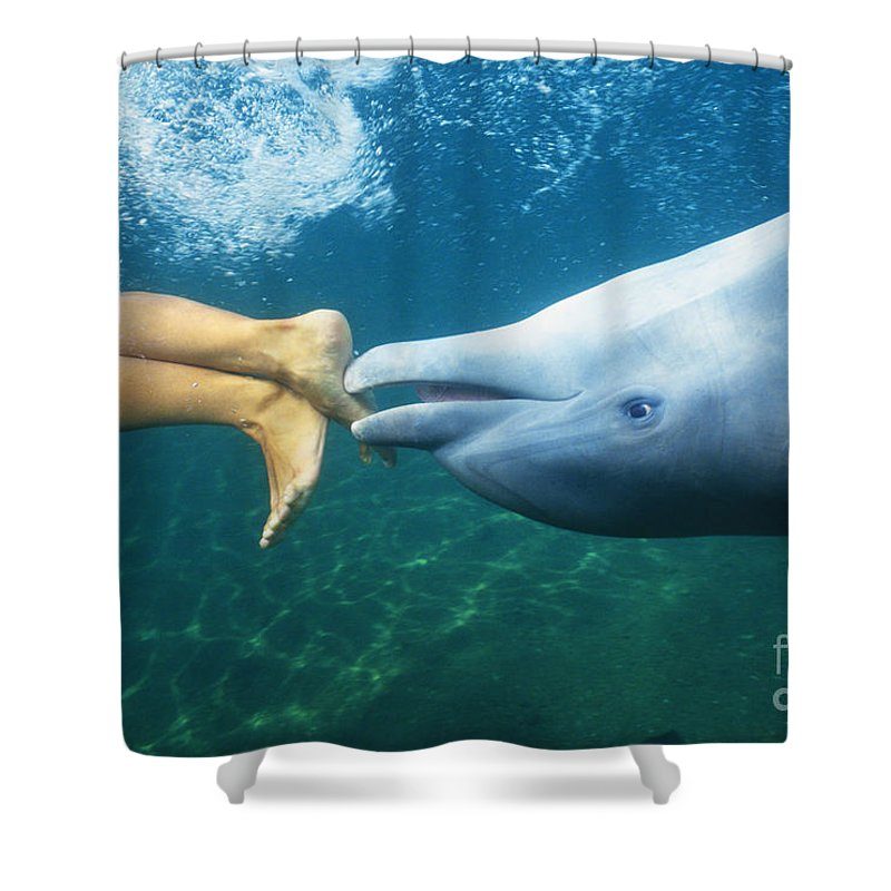 Air Shower Curtain featuring the photograph Bottlenose Dolphin by Bob Abraham - Printscapes