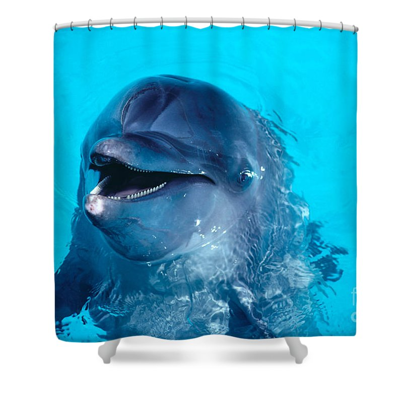 Above Shower Curtain featuring the photograph Bottlenose Dolphin by Ed Robinson - Printscapes