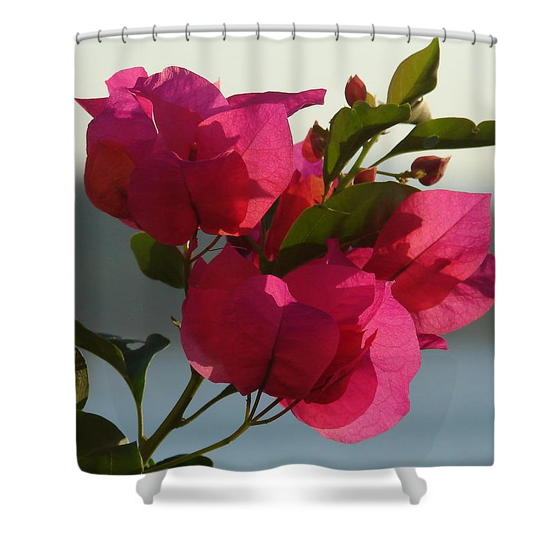 Shower Curtain featuring the photograph Bougainvilla by Luciana Seymour