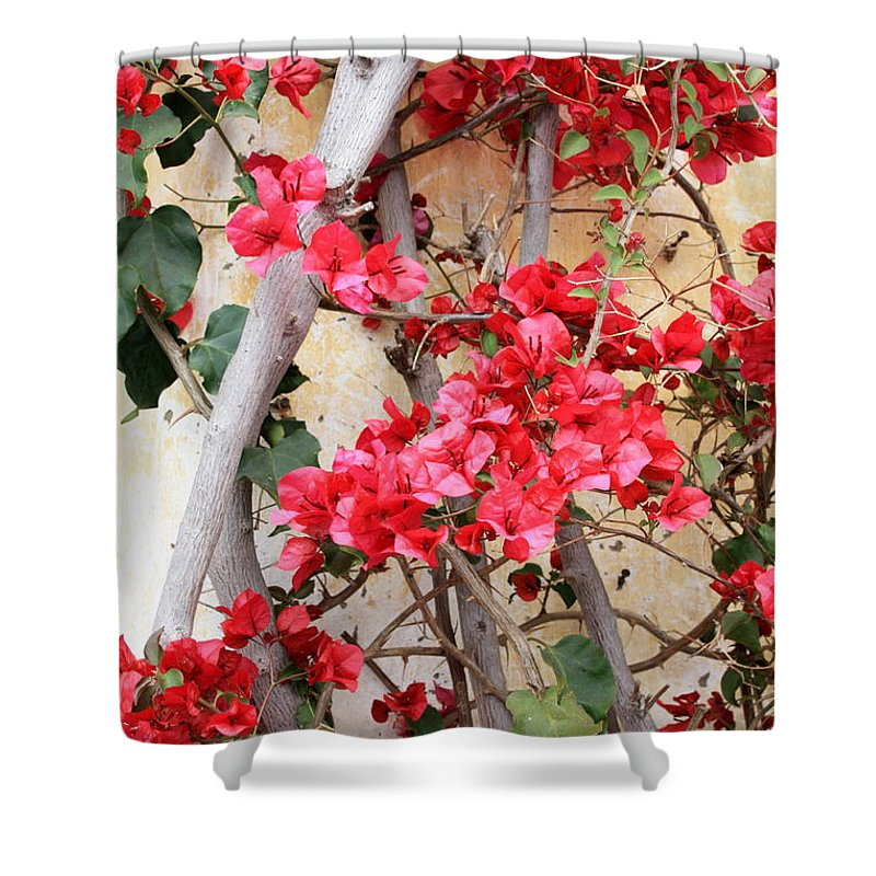 Bougainvilla Shower Curtain featuring the photograph Bougainvillea by Carol Groenen