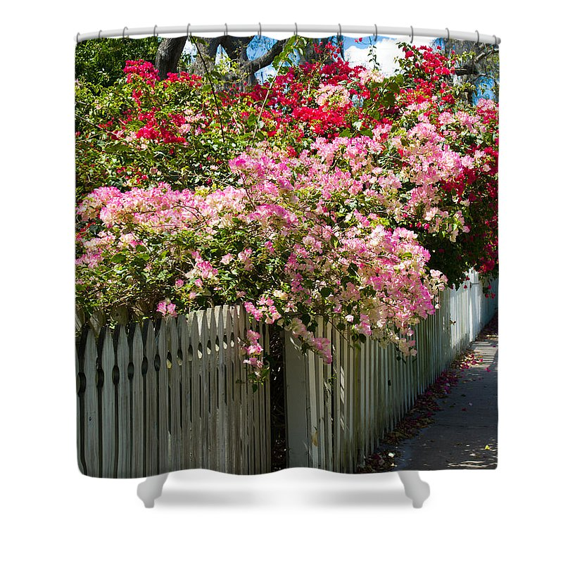 Nyctaginaceae; Bougainvillea; Flower; Flowers; Flowering; Bloom; Bloomimg; Blossom; Blossoming; Red; Shower Curtain featuring the photograph Bougainvillea In Old Eau Gallie Florida by Allan Hughes