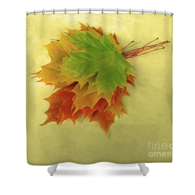 Season Shower Curtain featuring the photograph Bouquet De Feuilles / Bunch Of Leaves by Dominique Fortier