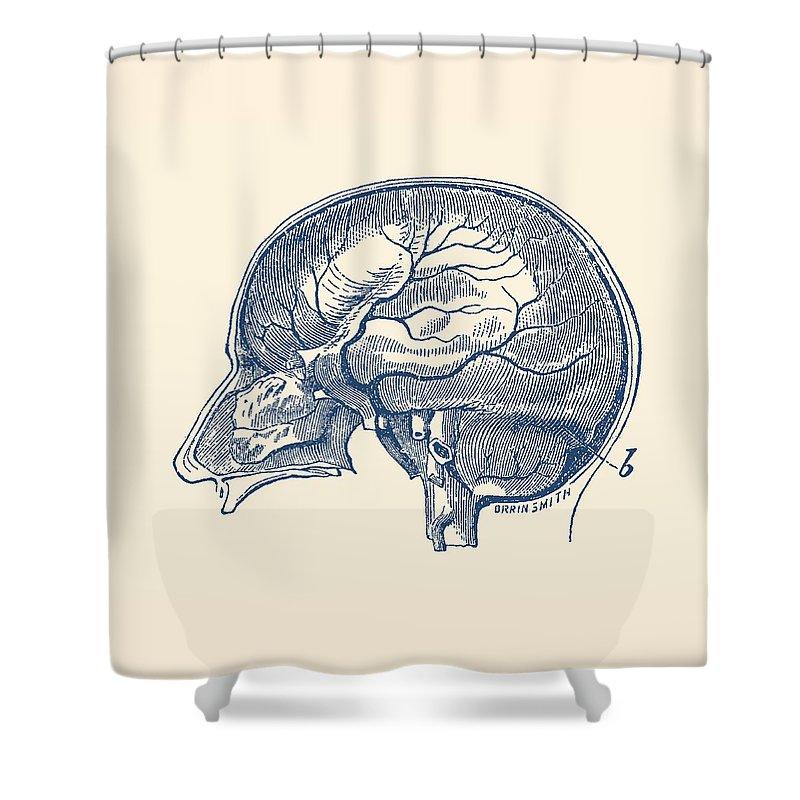 Brain Diagram Two - Anatomy Poster Shower Curtain