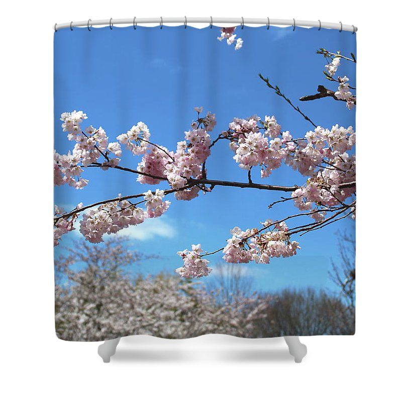 Blossoms Shower Curtain featuring the photograph Branch Of Blossoms by Nadia Asfar