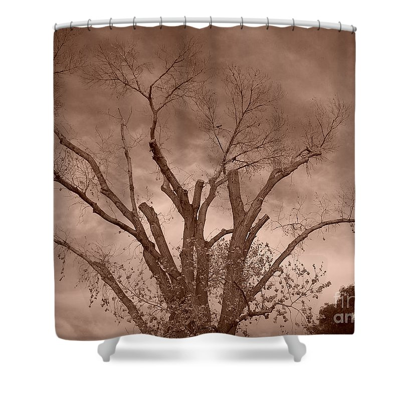 Sepia Shower Curtain featuring the photograph Branches Against Sepia Sky H  by Heather Kirk