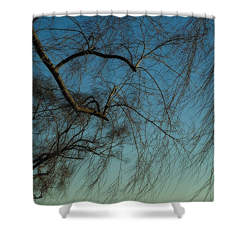 Groton Shower Curtain featuring the photograph Branches Of A Weeping Willow Tree by Todd Gipstein